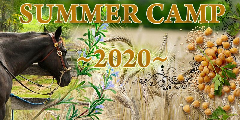 Summer Camp 2020: półkolonie językowe we Wrocławiu
